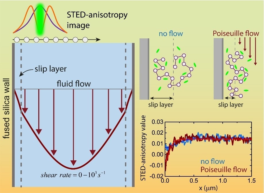 New Insights into Nanoscopic Slip Layers Formed in Flowing Complex