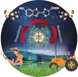 Single-Step Process for Chemical Detoxification and