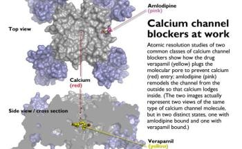 Atomic Level Analysis Showcases Functioning of Calcium Channel Blockers