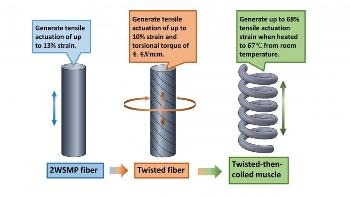 New Two-Way Shape Memory Polymer Fiber Improves Tensile Actuation Abilities of Coiled Muscle Fibers
