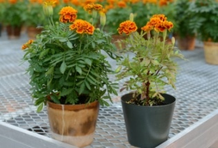 Bioplastic Plant Pots Get the Better of Petroleum-Based Plastic Pots