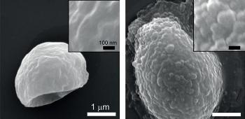 Breakthrough Method to Grow Polymers from Surfaces of Living Cells