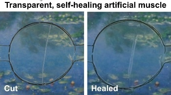 Scientists Create Transparent, Self-Healing, Highly Stretchable Conductive Material