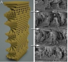Mantis Shrimp Inspires Next Generation of Super-tough Composites