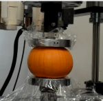 Compression Test on Pumpkins Using Instron Machine