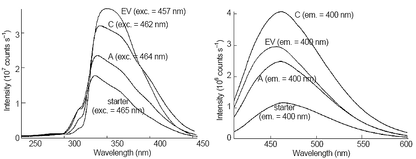 Comparison of fluorescence excitation (left side) and emission (right side) of Samples A, C, and a 100-fold dilution of starter solution. Next to each trace, the excitation or emission wavelength is given.