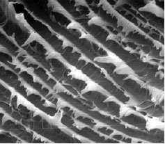 True fatigue-like striations were apparent on the fracture surface (SEM Original Mag. 1000X).